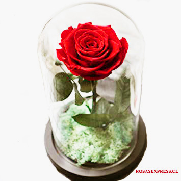1518 Cúpula de Vidrio con Rosa Natural Importada Producto exclusivo de Florerias de Chile - Rosas Express