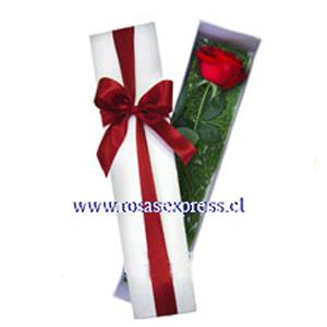 1586 Caja de 01 rosas importadas finamente presentada