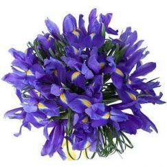 1776 Bouquet 10 varas de iris y adornos de complemento
