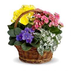 1888 canasta floral mixta de primavera. RosasExpress Florerias de Chile
